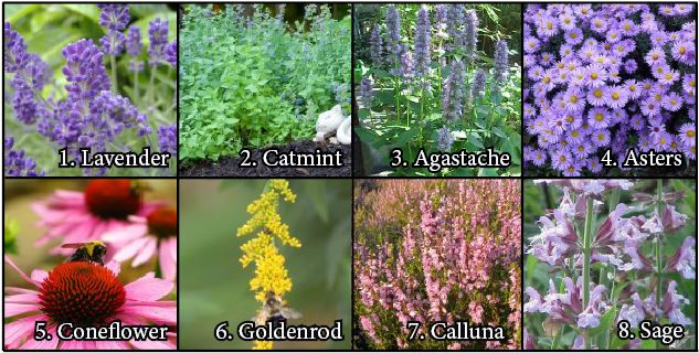 What To Plant In Your Bee-Friendly Garden