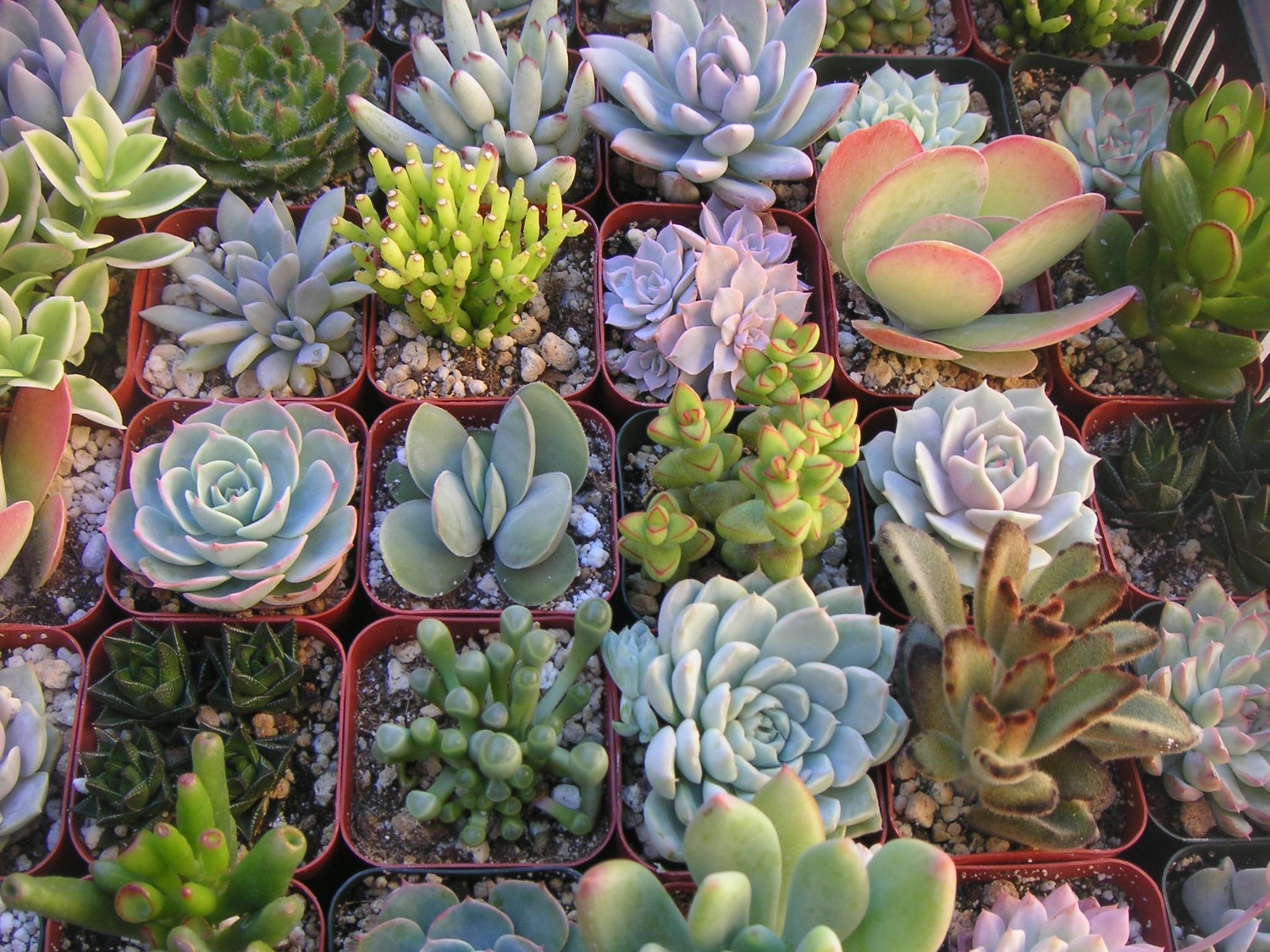 The BUZZ about #Succulents