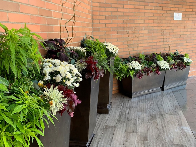 Services Softscape Planters