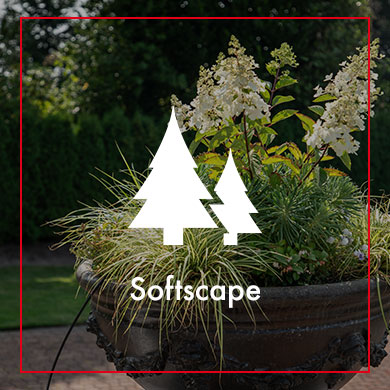 Softscape gallery thumbnail