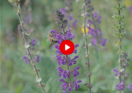 In 2011, our company approached the District of North Vancouver to have the opportunity to develop a plot of land that was full of weeds and bramble on Capilano Road near Ridgewood. It has now turned into a living Native Bee Garden that has flourished to be the home to insects, native bees and more. Go check it out!